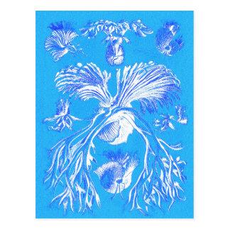 Filicinae on Blue Background Postcard