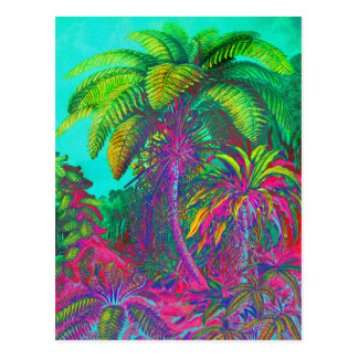 Filicinae Trees and Ferns Postcard