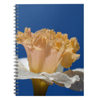 Final Chapter Spiral Note Book