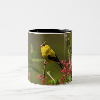 Finch in bush Two-Tone coffee mug
