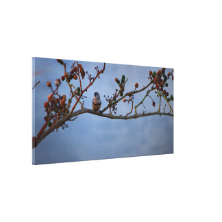 Finch on branch canvas print