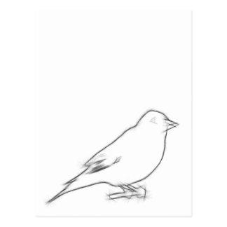Finch Sketch Postcard