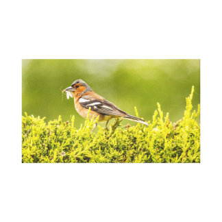 """Finch with fly"" canvas prints/wall art"