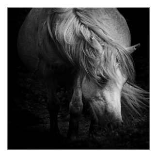 Fine Art Pony Head and Mane print