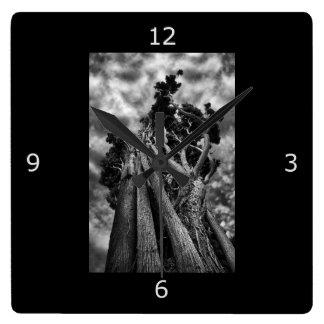 Fine Art: Surreal Trees Clocks
