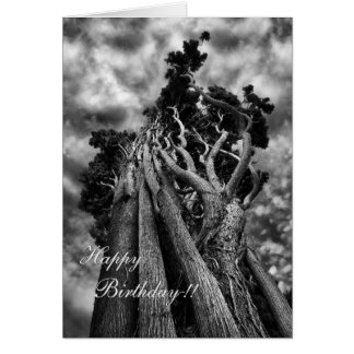 Fine Art Surreal Trees in Black and White Card
