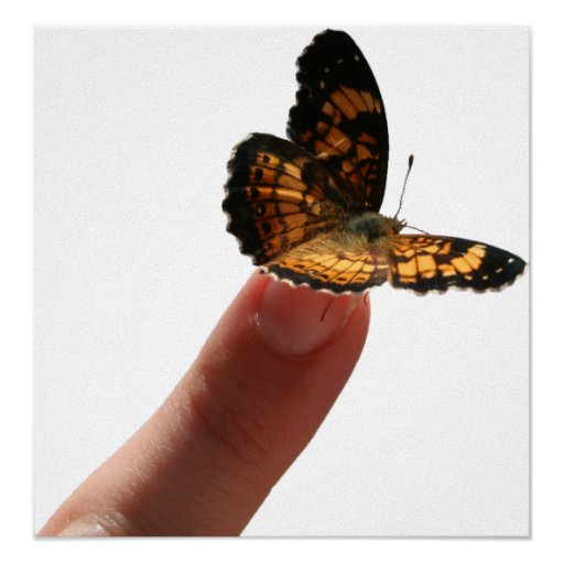 Finger Butterfly Posters