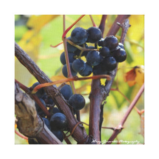 Finger Lakes Wine Country Grapes on Canvas Gallery Wrapped Canvas