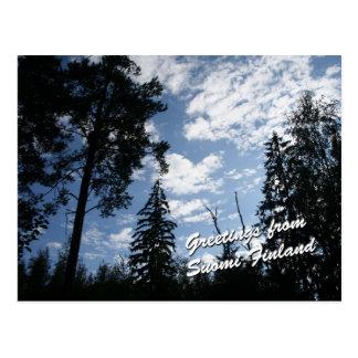 Finland Forest Postcard