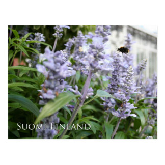 Finland in Flowers, 6th in a series Postcard
