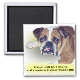Finnish hangover bulldog square magnet