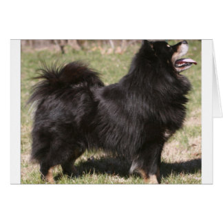 finnish lapphund full.png card