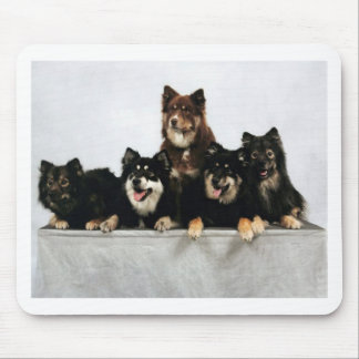 finnish lapphund group mouse pad