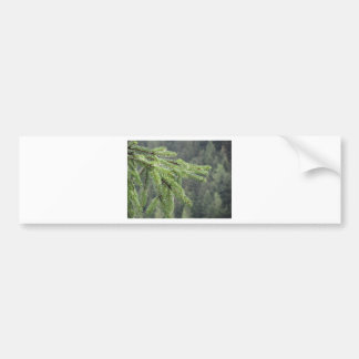 Fir tree branches dripping water drops bumper sticker