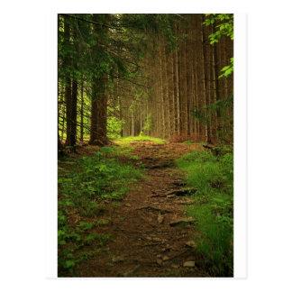 Fir Tree Path Postcard