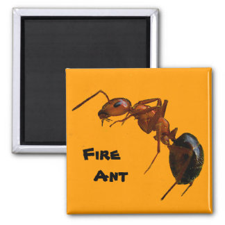 Fire Ant Square Magnet