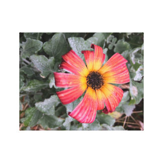 Fire-colored flower canvas print