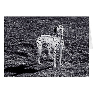 Fire House Dalmatian Dog in Black and White Ink Greeting Card