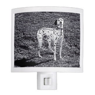 Fire House Dalmatian Dog in Black and White Ink Nite Lite