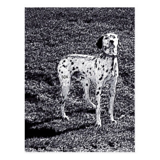 Fire House Dalmatian Dog in Black and White Ink Postcard