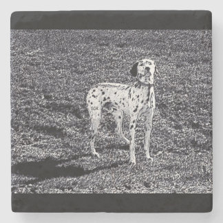 Fire House Dalmatian Dog in Black and White Ink Stone Beverage Coaster