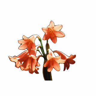 Fire Lily, a Cyrtanthus Hybrid Standing Photo Sculpture