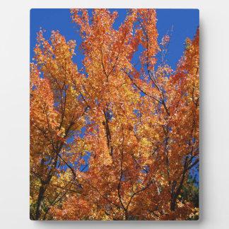 Fire Orange Tree Plaque