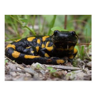 Fire Salamander Postcard