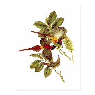 Fire-tailed Sunbird Postcard