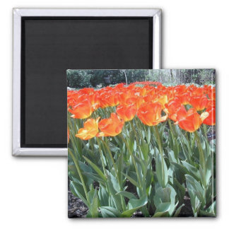Fire Tulips Magnet