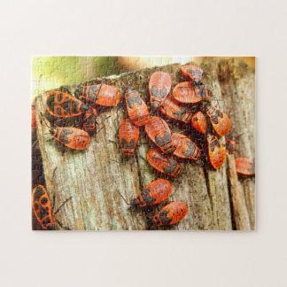 Firebugs Photo Puzzle with Gift Box