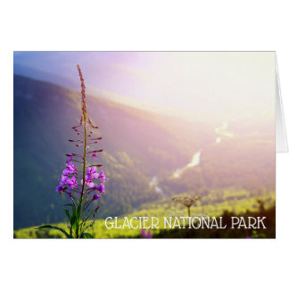 Fireweed at Glacier National Park Card