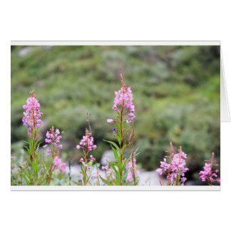 Fireweed Card