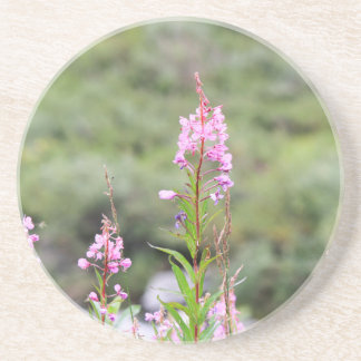 Fireweed Coaster