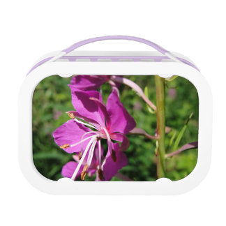 Fireweed Lunch Box