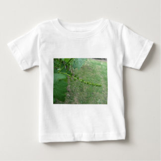 First buds on white mulberry tree ( Morus alba ) Baby T-Shirt