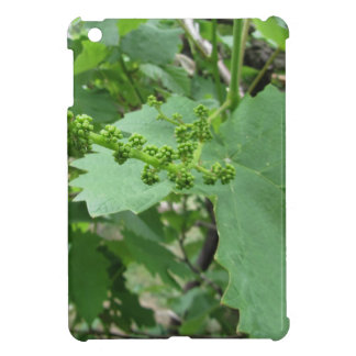 First buds on white mulberry tree ( Morus alba ) iPad Mini Cover