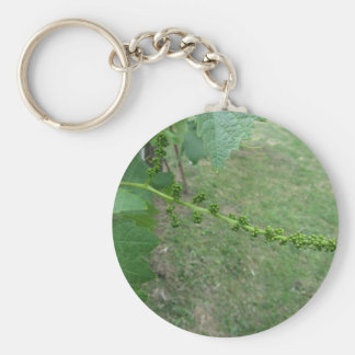 First buds on white mulberry tree ( Morus alba ) Keychain