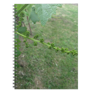 First buds on white mulberry tree ( Morus alba ) Spiral Notebook