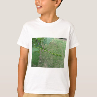 First buds on white mulberry tree ( Morus alba ) T-Shirt