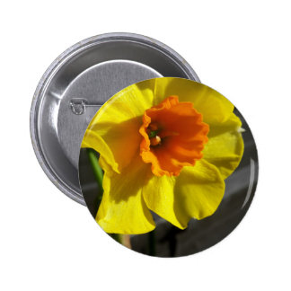 first daffodil 2 inch round button