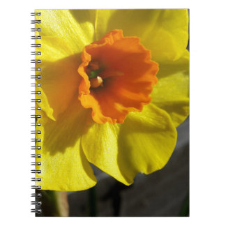 first daffodil notebook