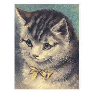 """First Prize"" Vintage Cat Portrait Postcard"