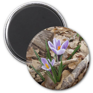 FIRST SPRING FLOWER products Magnet