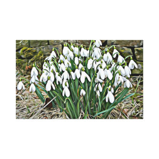 First spring flowers, white snowdrop canvas print