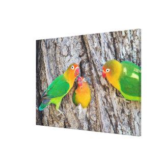 Fischer's Lovebird Mates Canvas Print