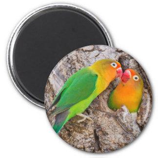 Fischer's Lovebirds kissing, Africa 2 Inch Round Magnet