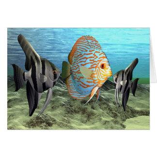 fish6 card
