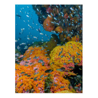 Fish Among Coral Reef Postcard