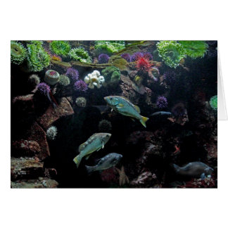 Fish and Underwater Aquatic Life Photo Card